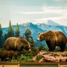 Bear diorama