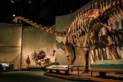 DMNS Dinosaur bones